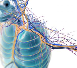 Peripheral Nerves Disorders